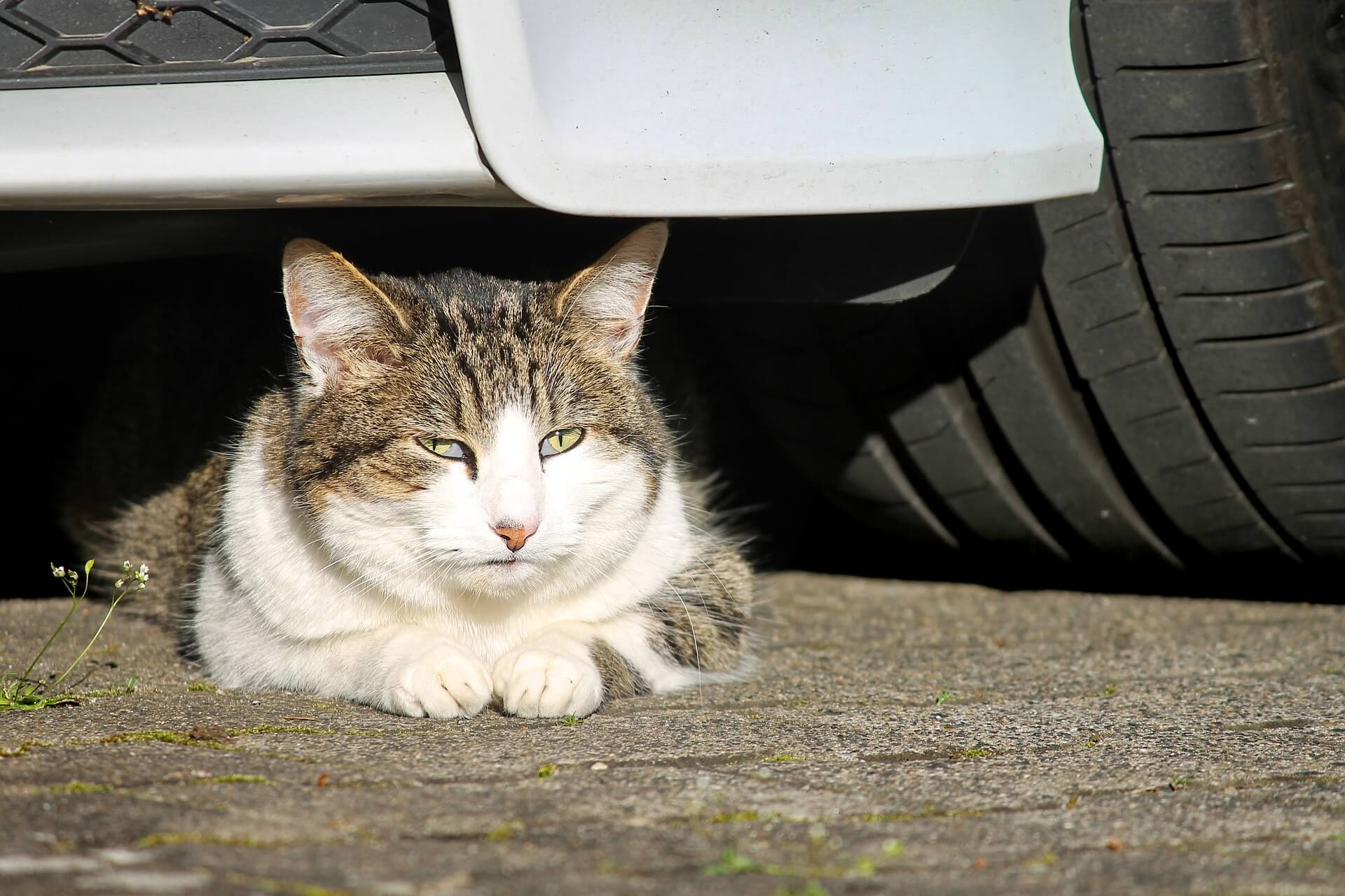 Zanim ruszysz zajrzyj pod samochód