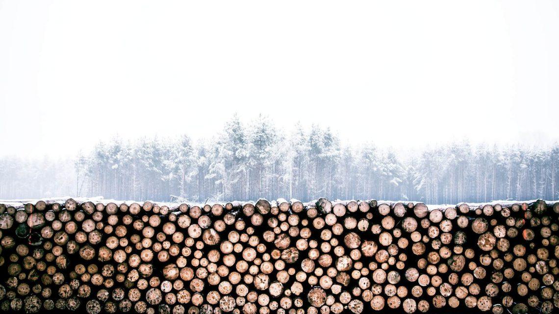 Wiecznie żywy surowiec – drewno